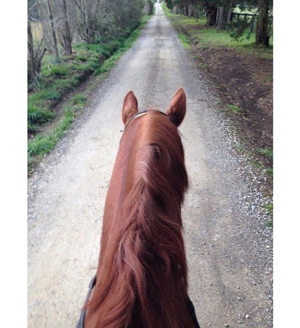 horse instagram background