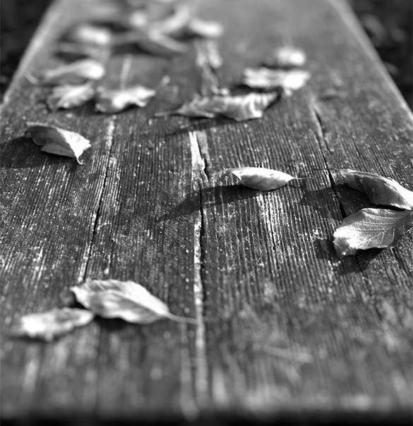 wooden board with fallen leaves kindle backgrounds