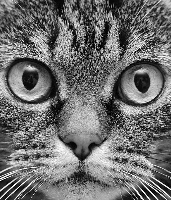 surprised cat screensaver for amazon kindle dx