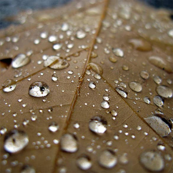 leaf and water droplets kidnle background