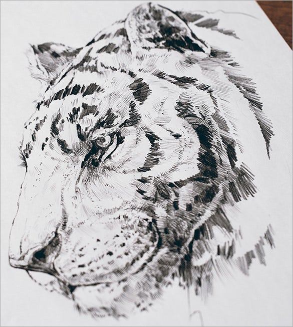 tiger pencil drawing free download