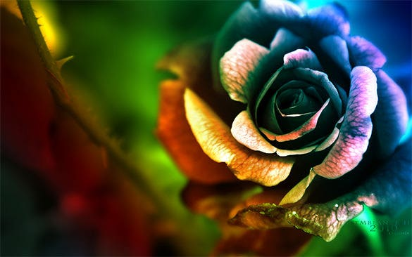 semblance flower wallpaper free download