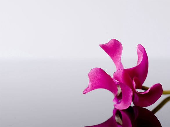 purple flower wallpaper for free