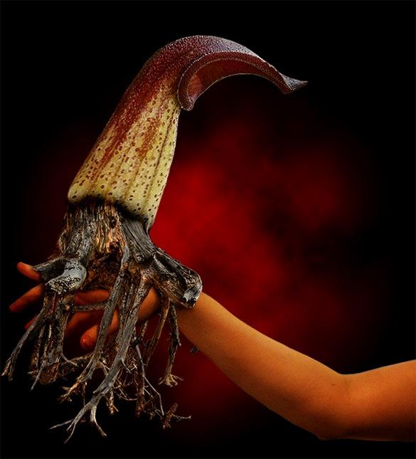a fantasy flower creature