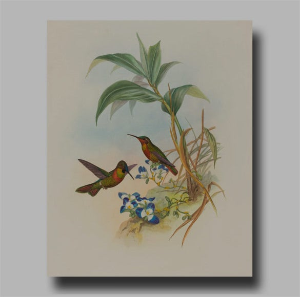 best hummingbird illustration art