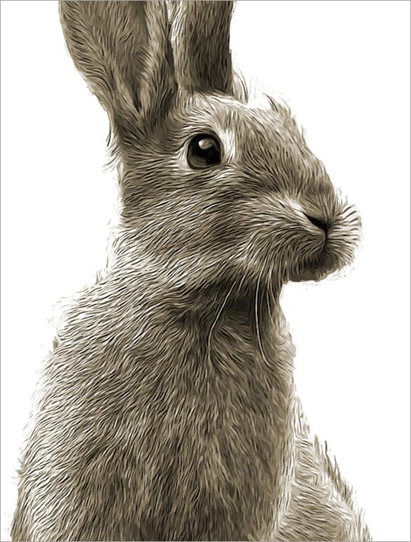 Realistic rabbit illustration - photo#28
