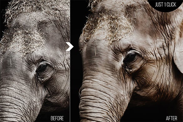 elephant realistic painting action