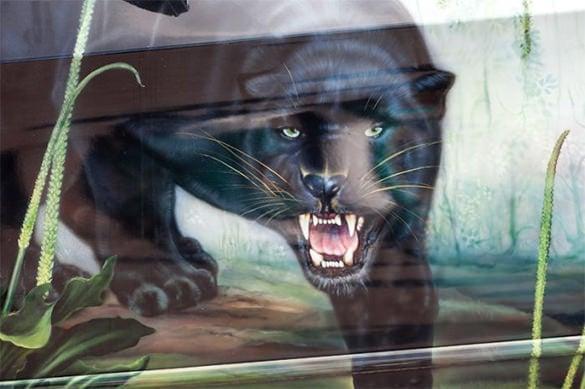 black tiger aerography design