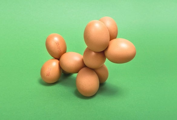 eggs puppy conceptual art