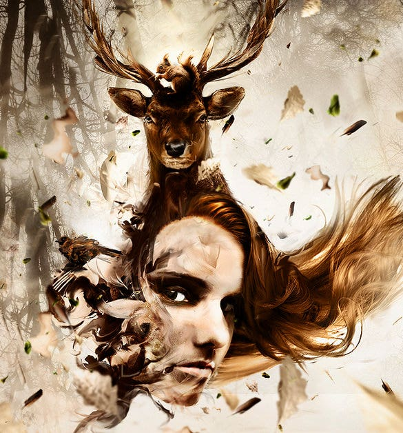 design inspiration deer photography