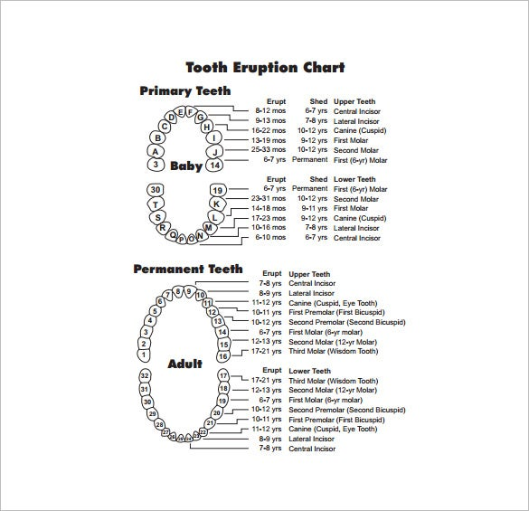 free teething timeline chart pdf download