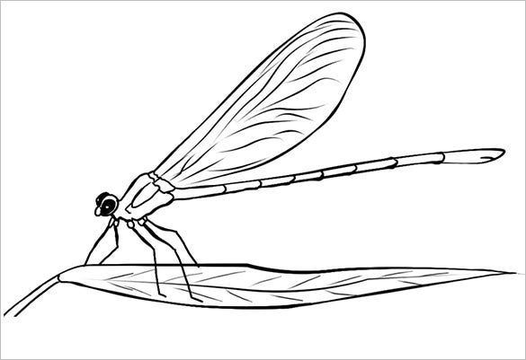 18 dragonfly templates crafts colouring pages free for Dragonfly coloring pages