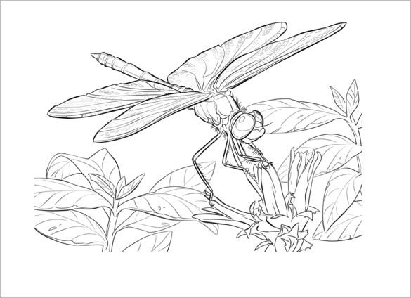 winger dragonfly template