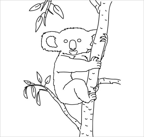 beautiful koala on tree template