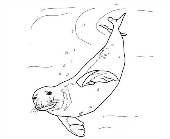 swimming seal template