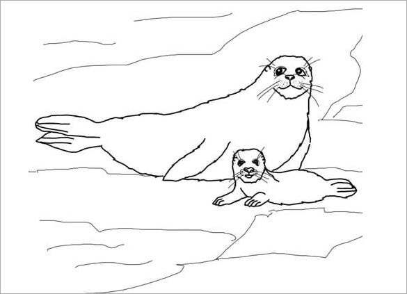 seal with baby coloring template
