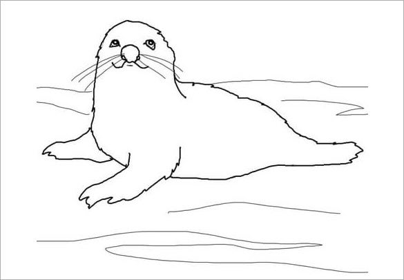 harp seal coloring template