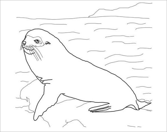 fur seal printable template