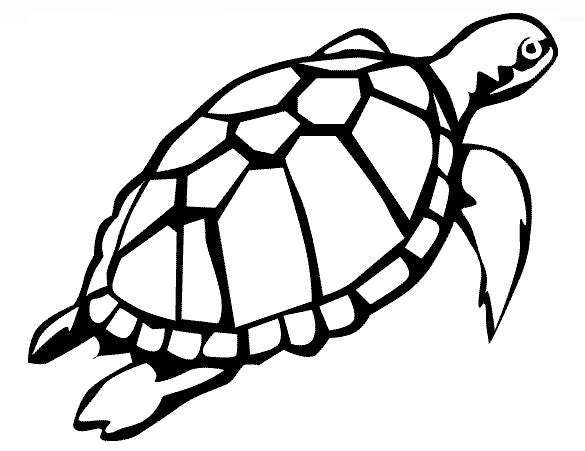 turtle swiming printable template3
