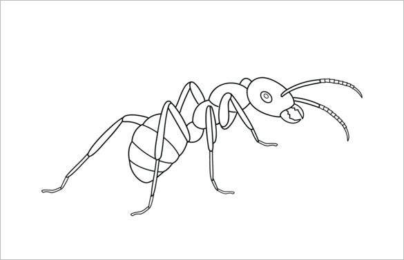 simple ant printable template