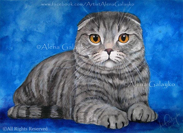 scottish fold pet cat portrait painting
