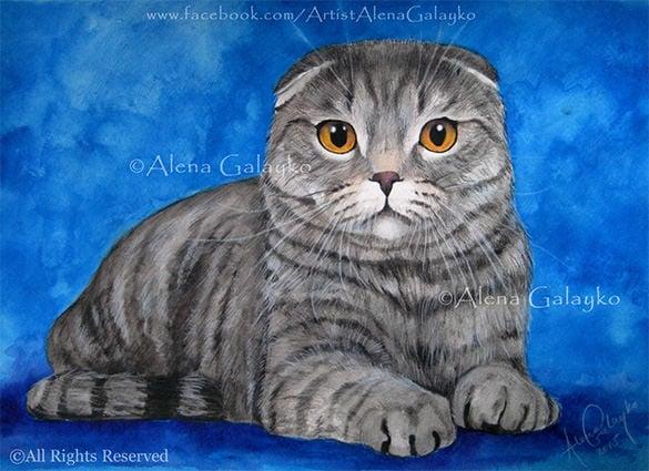 scottish fold pet cat portrait painting