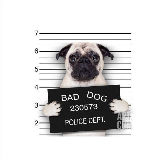 mugshot dog funny wanted poster template