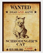 Funny-Cat-Wanted-Poster