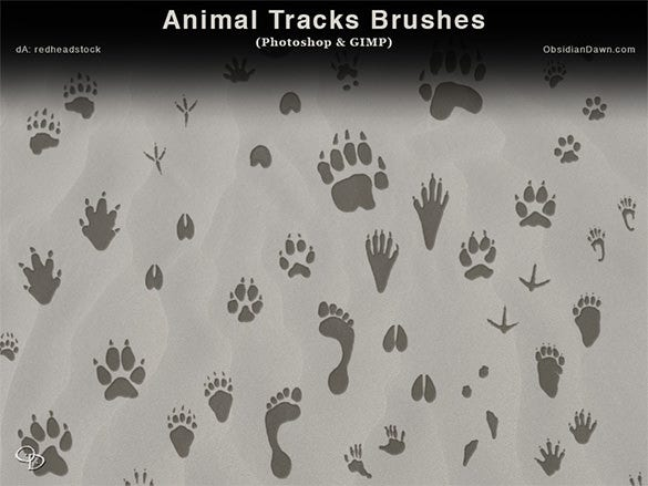 32 animal track photoshop brushes