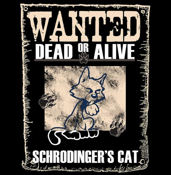 funny cat wanted poster example download