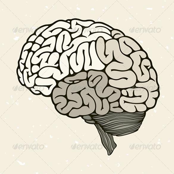 premium human brain vector download