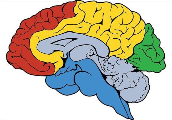 astonishing free human brain vector