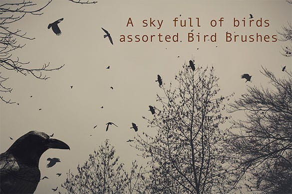 bird brushes a sky full of birds abr download