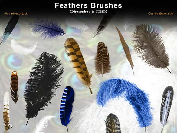 free birds feathers photoshop brushes