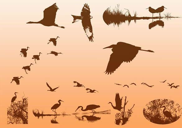 waterfowl bird photoshop brush download