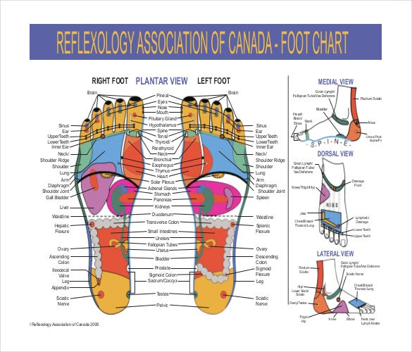 reflexology chart for feet pdf format download