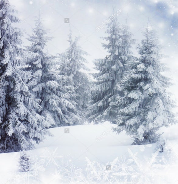 christmas background with winter snowy fir trees