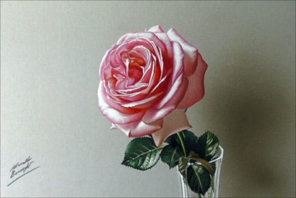 natural rose drawing