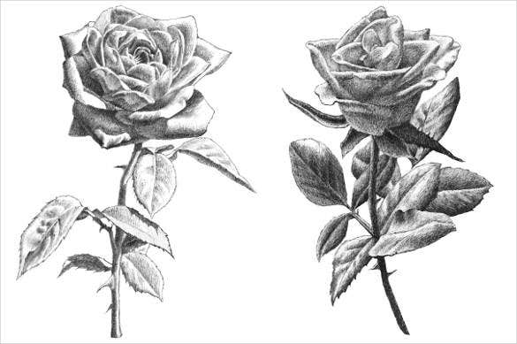realistic-hand-drawing-roses-psd