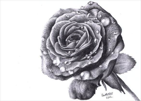 rose-images-drawing