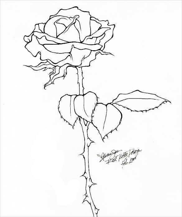 27 Rose Drawing Free Premium Templates
