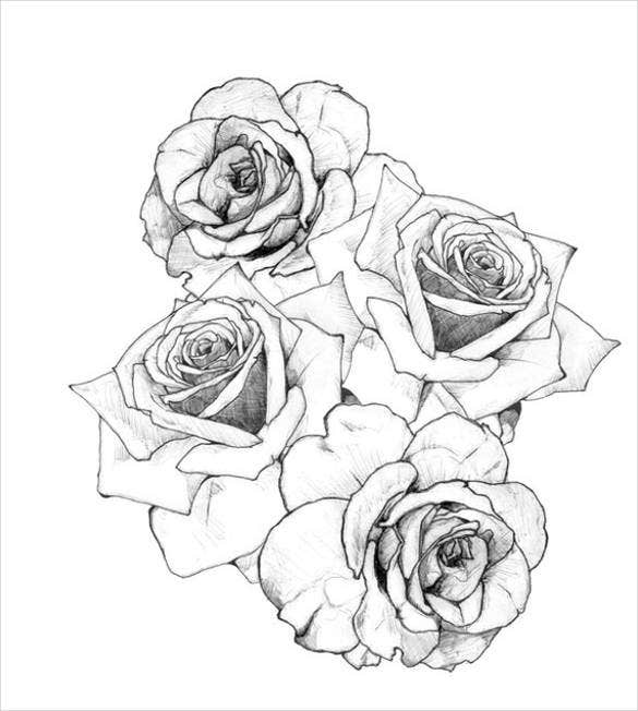Line Drawing Of A Rose : Rose drawing free premium templates