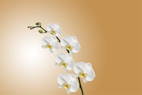 flower orchid nature plant background for wallpaper