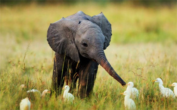 cute elephant baby in grass hd background