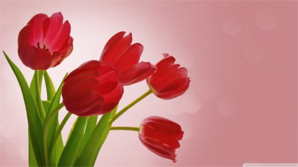 download cute red tulips wallpaper background for desktop