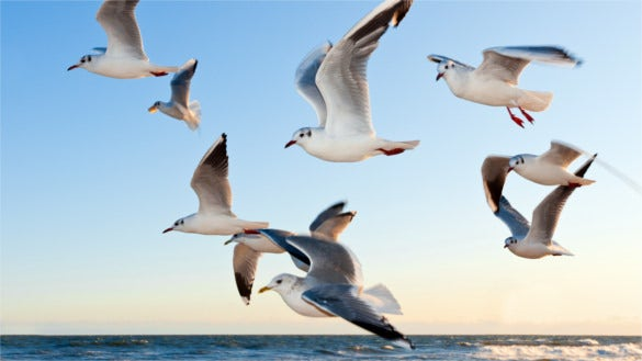 download hd backgrounds gulls birds flying sea