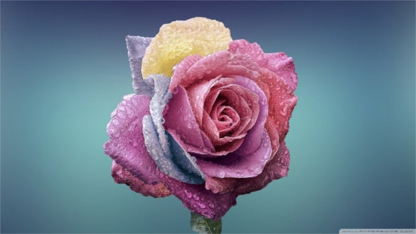 download colorful rose hd wallpaper download