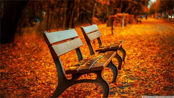autumn bench wallpaper background download for free