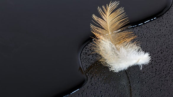 feather on water black surface hd background