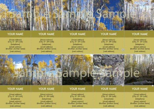 business card template aspen trees in the fall